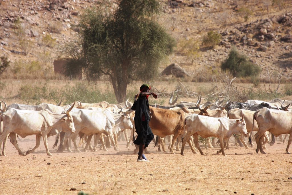 A herder near the border of Mauritania and Senegal