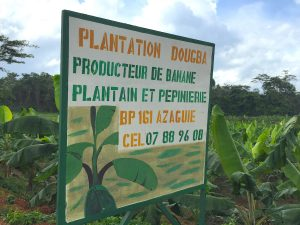 Plantation Dougba